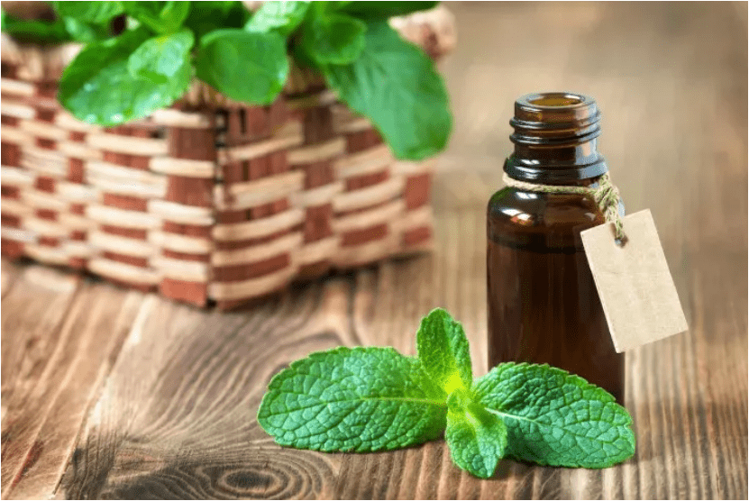 Benefits and Uses of Oregano Oil: A Detailed Guide
