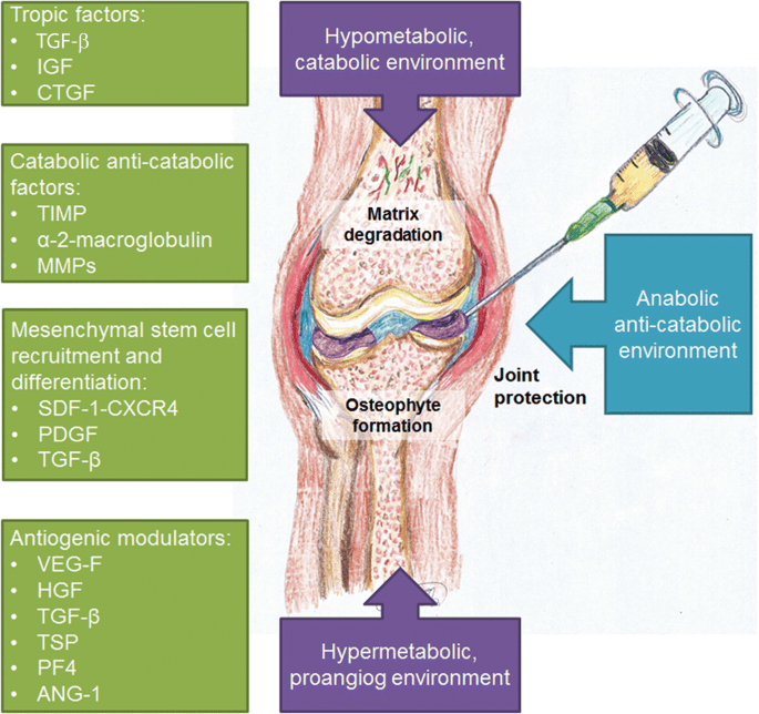 What is PRP Treatment? How is PRP treatment done?