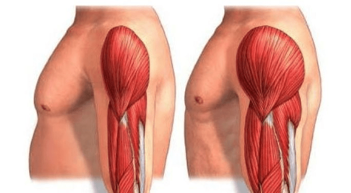 What is Muscle Hypertrophy? The 4 Rules of Hypertrophy