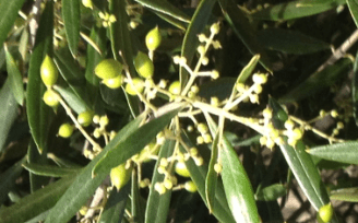 shotberries-closeup