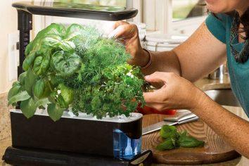 aerogarden plants healthy?