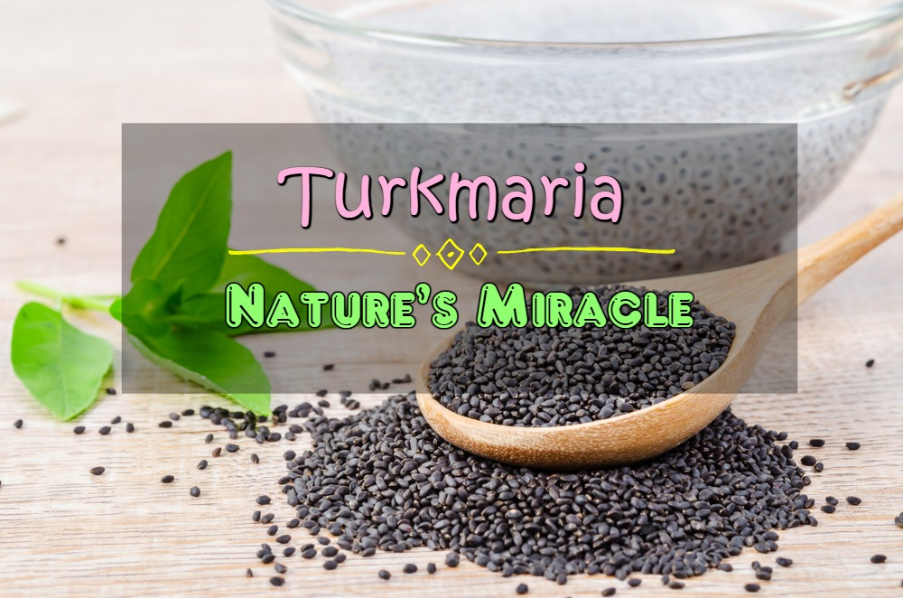 Turkmaria (Sabja seeds or Basil seeds or Tuk malanga) – Nature's Miracle