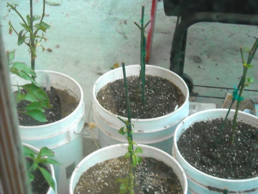 Winterizing Your Container Garden: Keep Your Plants Going for Years