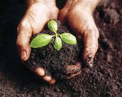 Nutrient Rich Compost