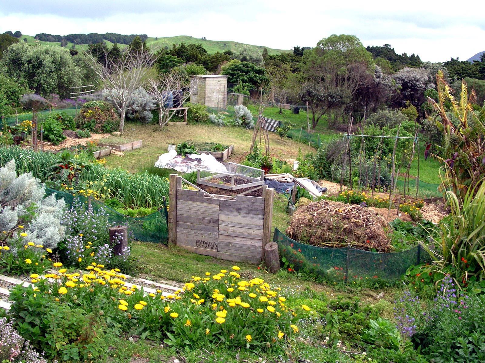 Permaculture Gardens are so much better than 'normal ... on Backyard Permaculture Design id=22274
