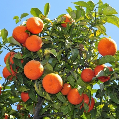 Discipleship Devotional Study Guide - Identity - Fruit That Will Last - John 15:16 - Growing As Disciples