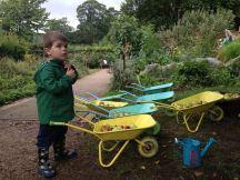 Mcgregor's garden