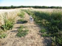 Mouse enjoying her walk