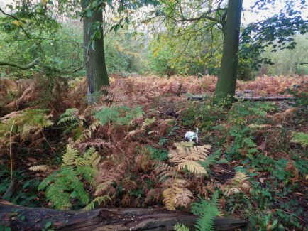 Ferns dying off for winter