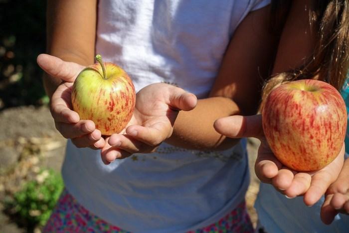 How to grow patio fruit trees