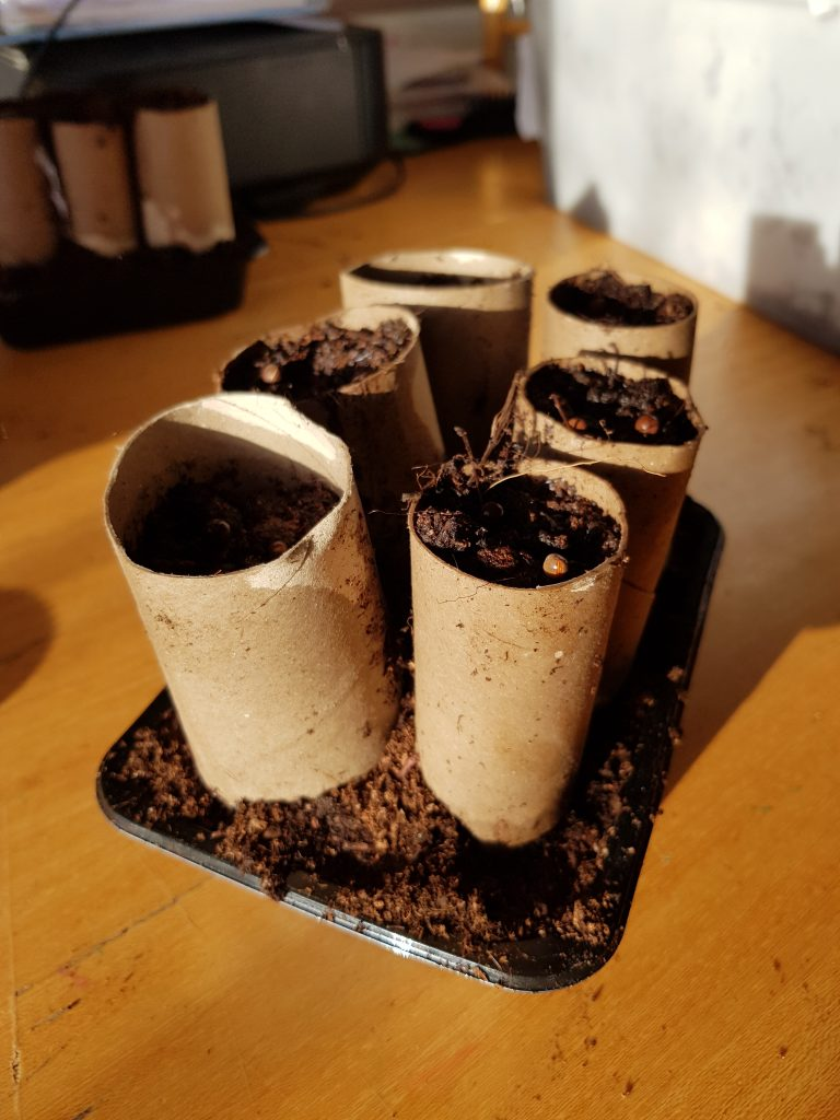 Winter gardening doesn't have to be expensive, use recycled objects like these loo roll tubes to sow seeds in.