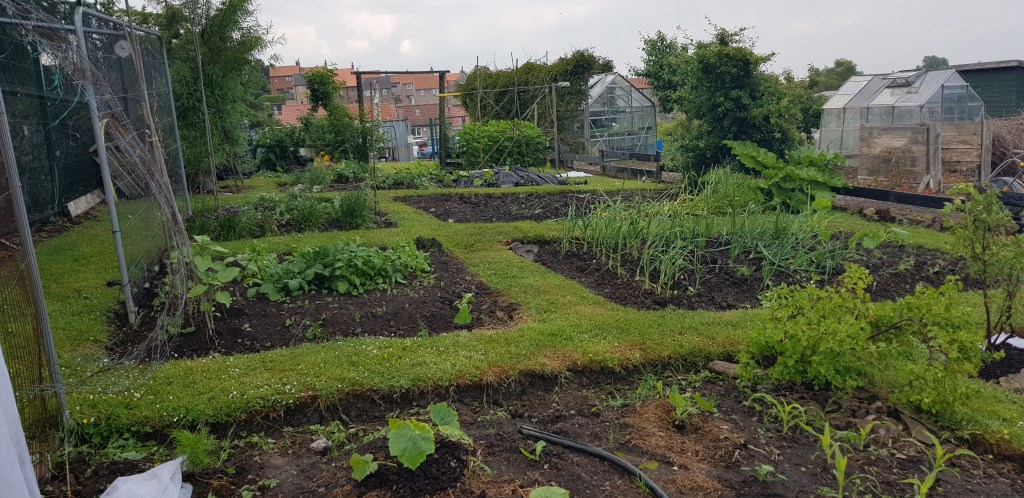 allotment help and tips