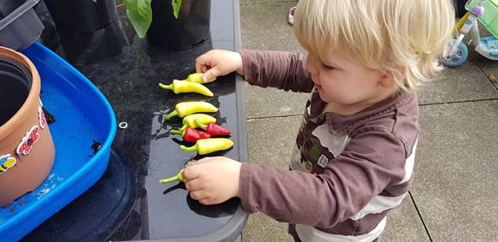 growing chillies with my kids
