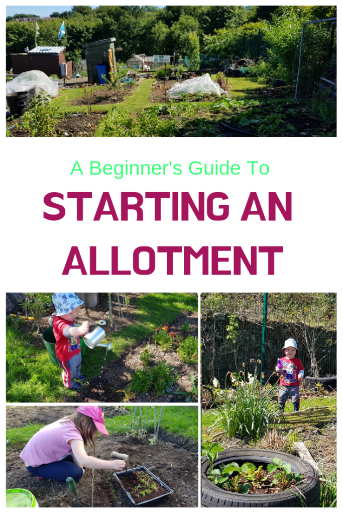 Starting an allotment can be overwhelming if you don't know where to start. Here is a plan to get you started and get it right!