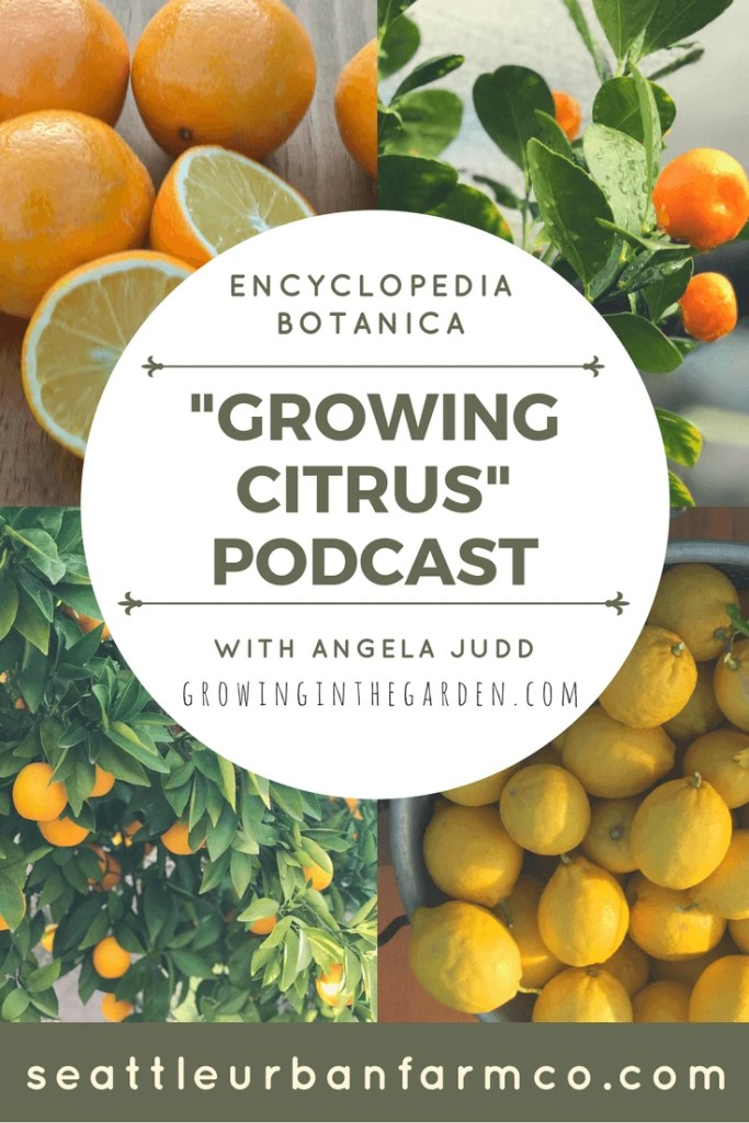 Have questions about planting, watering or fertilizing citrus? Listen to this podcast from Encyclopedia Botanica and Angela Judd from Growing in the Garden. #podcast #citrus #seattleurbanfarmco #howtogrowcitrus #arizonacitrus