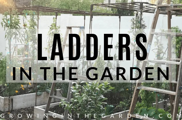 Is your garden short on garden space and lacking vintage flair? Give ladders in the garden a try. I love repurposing vintage items, and space in the garden is often limited. Fortunately, there's a simple solution for both problems…Ladders! Ladders in the garden are an easy way to add architectural interest and vertical space to your garden.