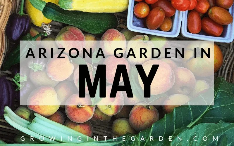 Arizona garden in May