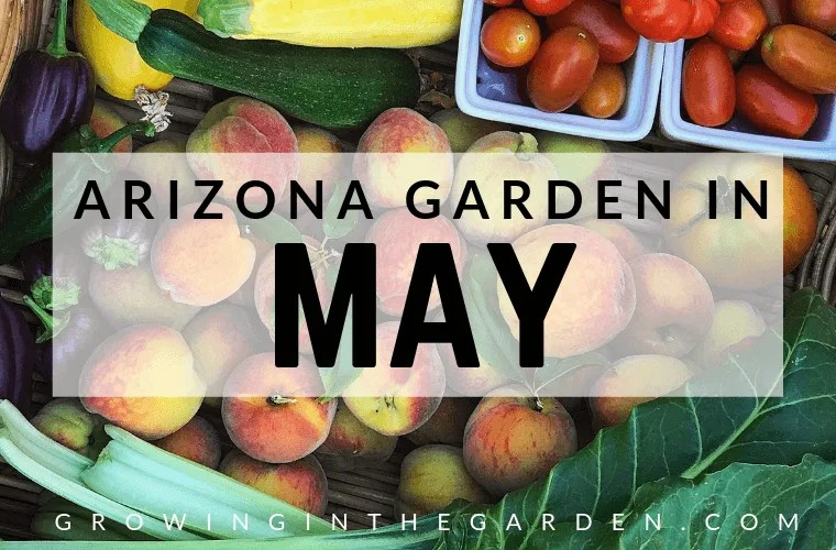 Arizona garden in May