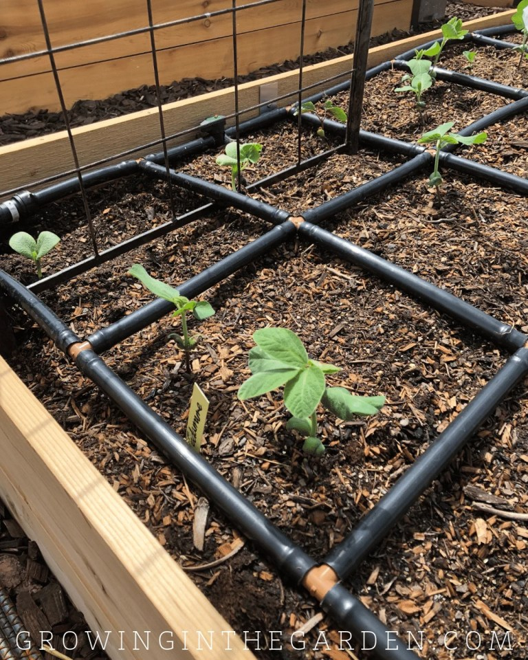 Thinking about adding a raised-bed garden to your yard? In my latest blog post, I walk you through 10 steps of how to design your garden. https://growinginthegarden.com/raised-bed-garden-design-tips/