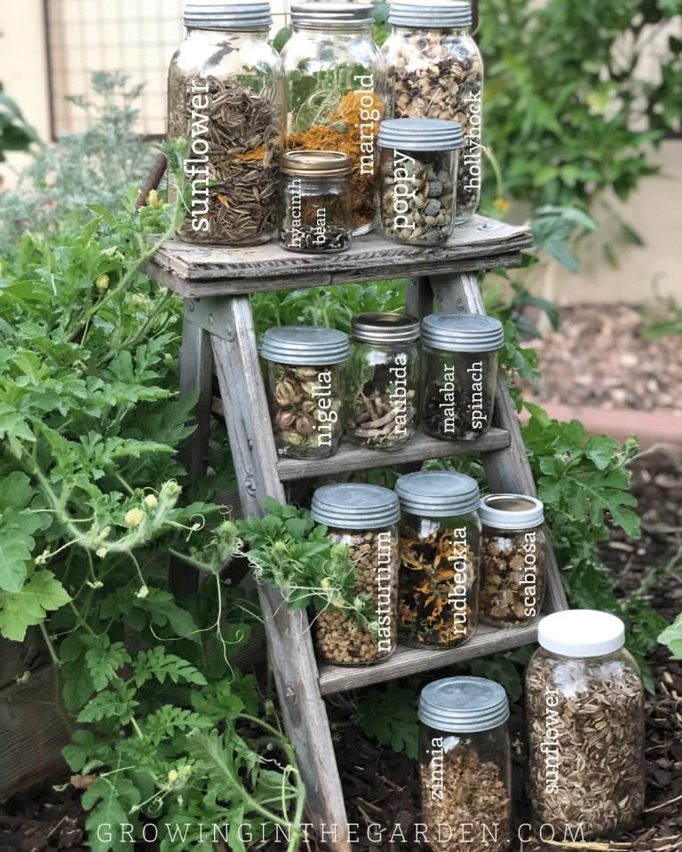 How to Save Seeds #seedsaving