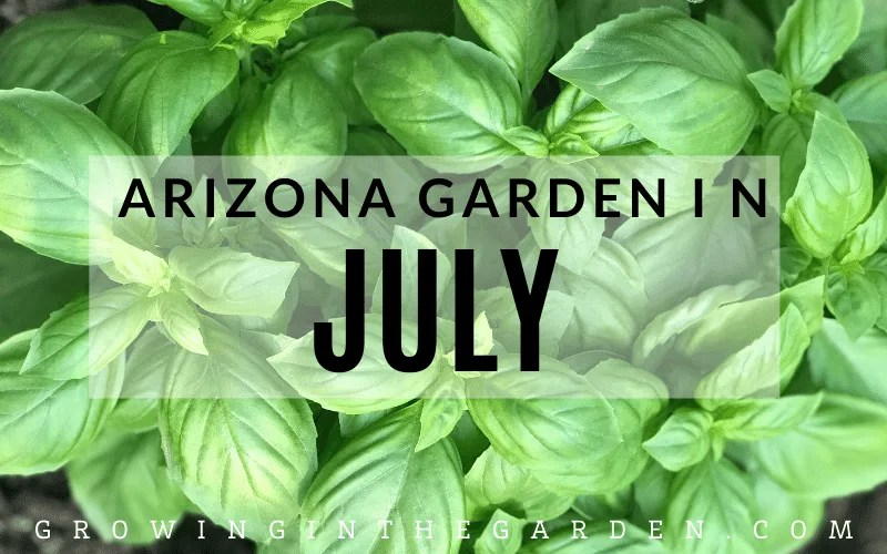 Arizona Garden in July