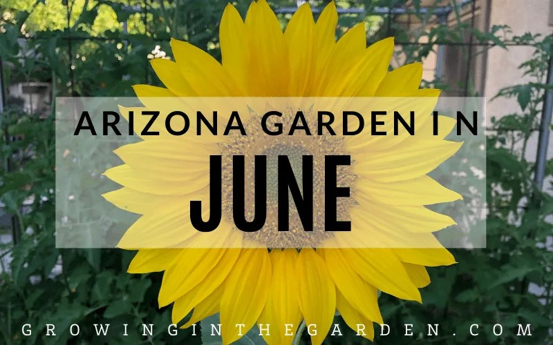 Arizona Garden in June