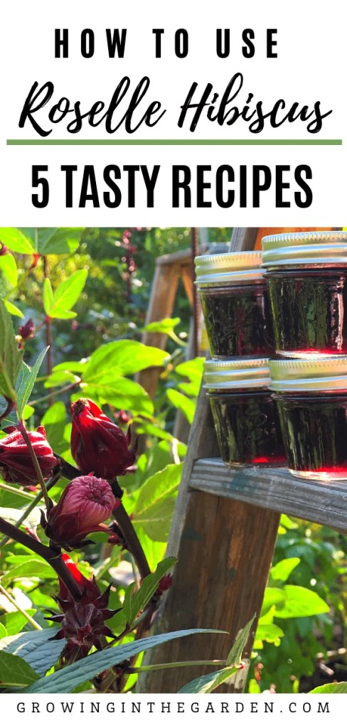 How to use Roselle Hibiscus: 5 Tasty Recipes