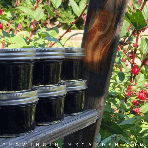 How to prepare Roselle Hibiscus: 5 Tasty Recipes