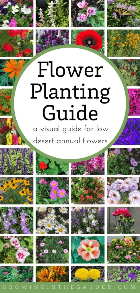 Arizona Annual Flowers A Visual Guide For Low Desert Flowers