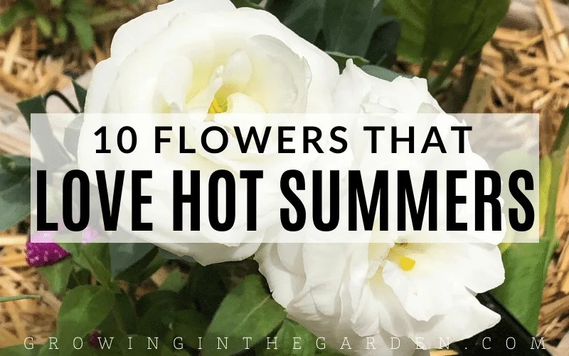 10 Flowers that love hot summers