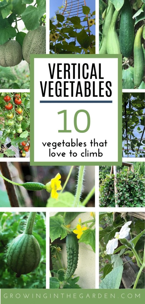 Vertical Gardening: 10 Vegetables that Love to Climb