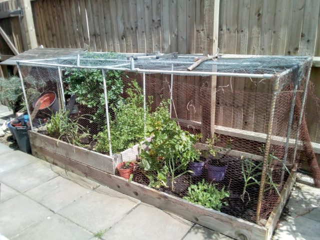 my current square foot garden is raised beds