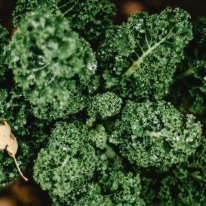 How to Grow the Best Kale in the Garden or Allotment