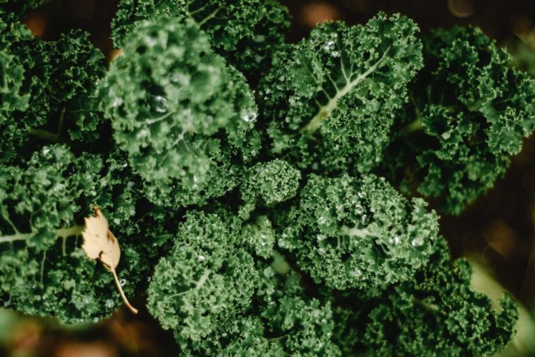 curly kale is also known as borecole