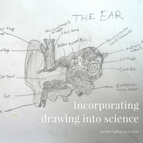 hands-on learning | ADHD | incorporating drawing into science