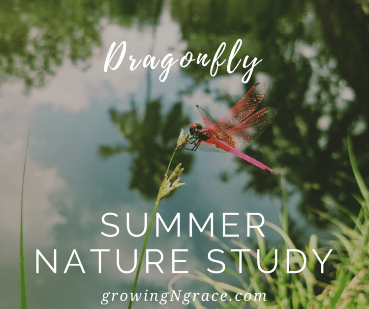 summer nature study | summer homeschool