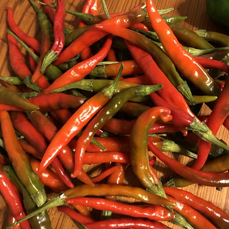 harvesting hot peppers