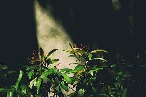 grow lighting | indoor gardening