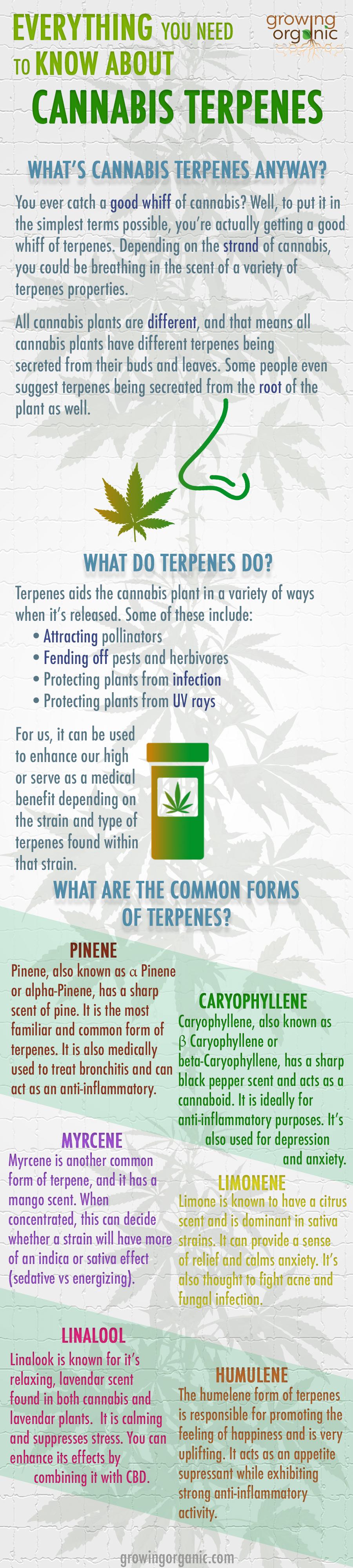 Cannabis Terpenes | Growing Organic