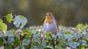birds in garden   pest control