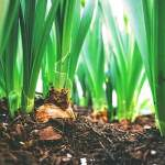 How To Make a Gardening Soil Mix