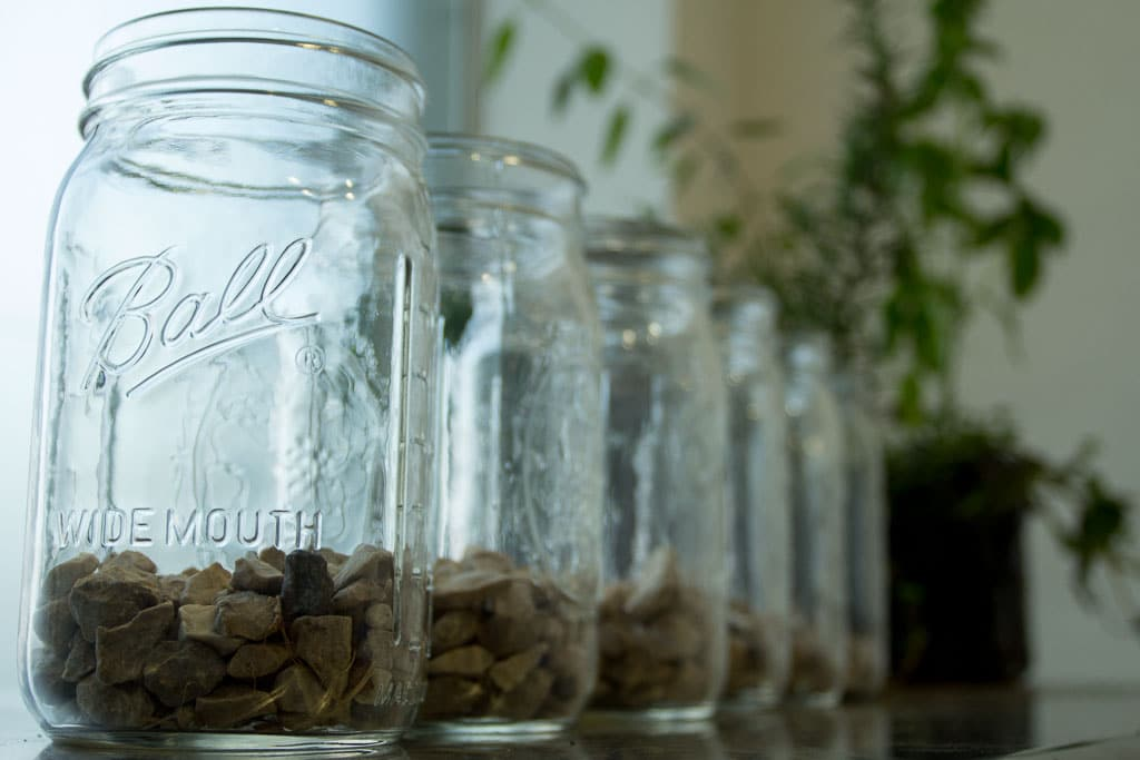 What Can You Grow In A Mason Jar Using Mason Jars In The Garden
