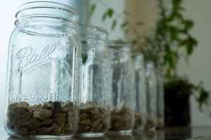 grow in a mason jar