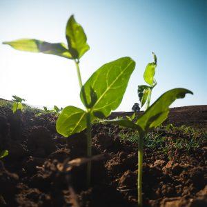 Soil + Compost