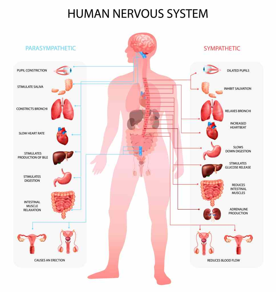 Nervous System Activation