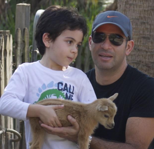 baby dwarf goat
