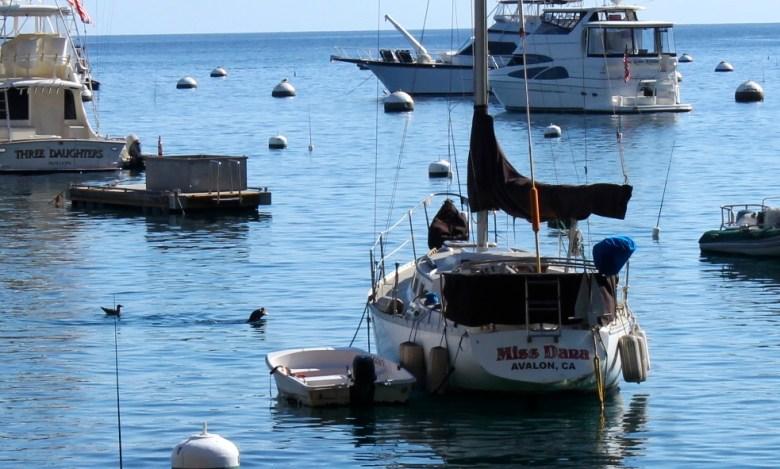 Santa Catalina Islanda Avalon harbor seals