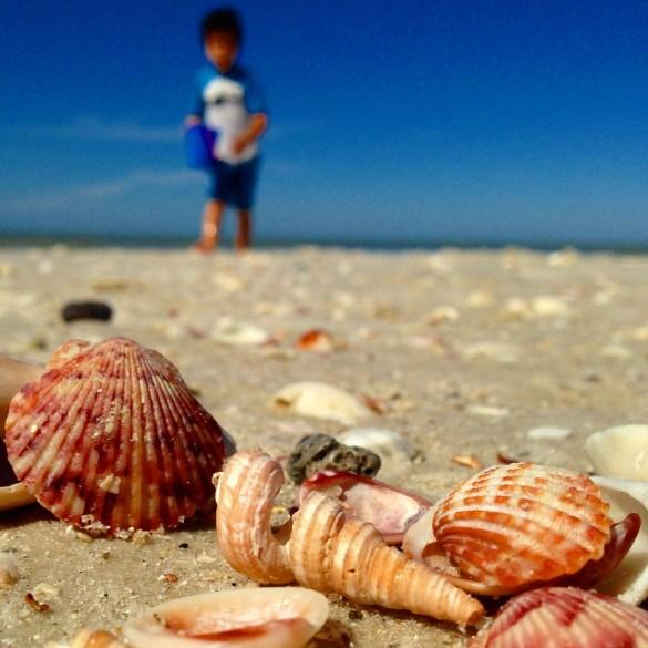 boy picking shells at the beach