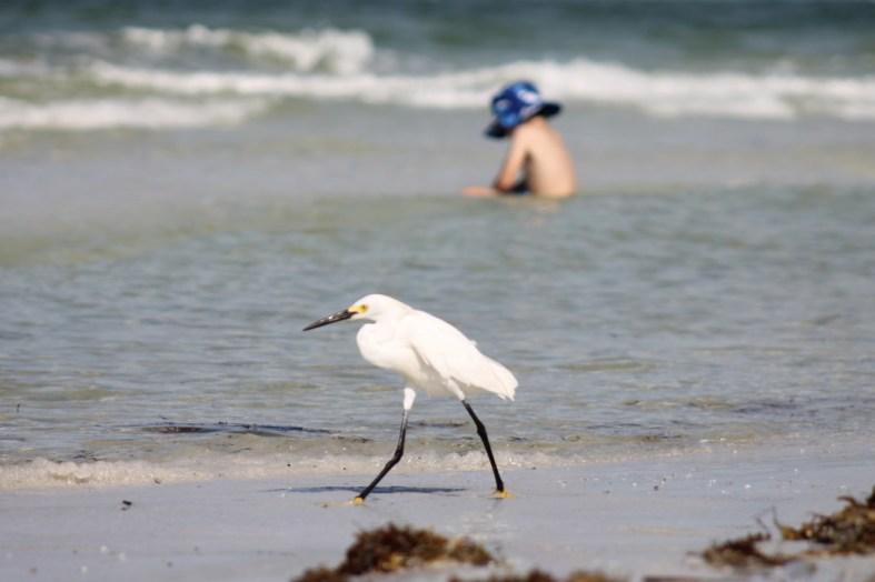 wading bird at the beach