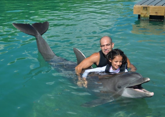 Swimming With Dolphins At Hawks Cay Resort in the Florida Keys
